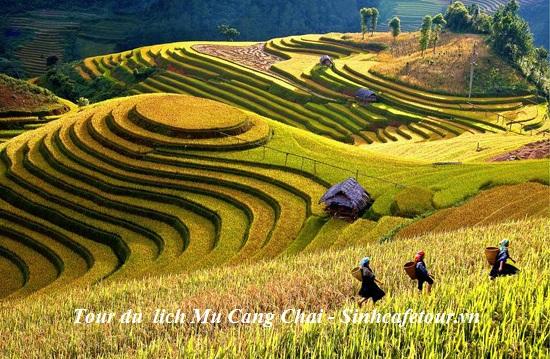 TOUR MÙ CANG CHẢI 3 NGÀY 2 ĐÊM
